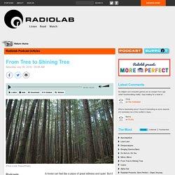 From Tree to Shining Tree