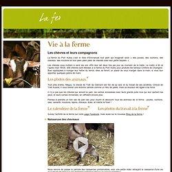 Fromages de chèvre et crottin de Chavignol fermier - Vie à la ferme - Port Aubry dans la Nièvre (58) près de Nevers