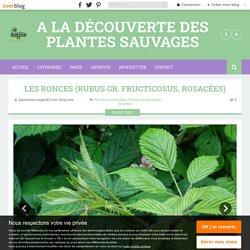 Les ronces (Rubus gr. Fructicosus, Rosacées)