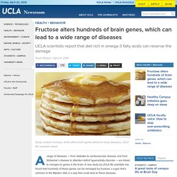 Fructose alters hundreds of brain genes, which can lead to a wide range of diseases