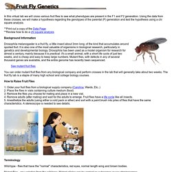 Fruit Fly Tutorial Index