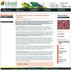 Jus de fruits et fleurs : de la mûre andine à l'hibiscus
