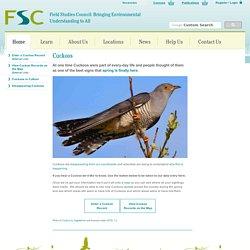 *****FSC Cuckoo Survey - FSC