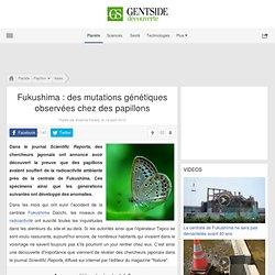 Fukushima : des mutations génétiques observées chez des papillons - Maxisciences