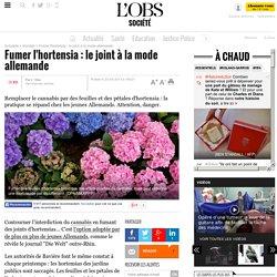 Fumer l'hortensia : le joint à la mode allemande
