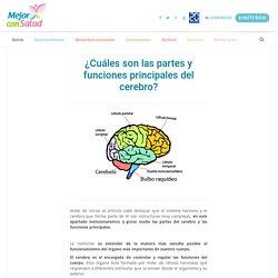 ¿Cuáles son las partes y funciones principales del cerebro?