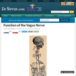 Function of the Vagus Nerve
