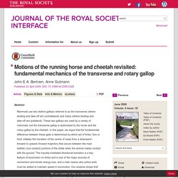 Motions of the running horse and cheetah revisited: fundamental mechanics of the transverse and rotary gallop