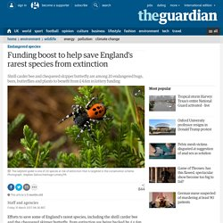 Funding boost to help save England's rarest species from extinction