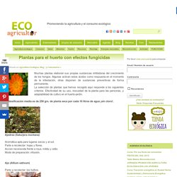 Plantas para el huerto con efectos fungicidas
