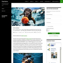 Funny Underwater Dog Pictures
