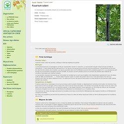 FREDON CORSE - Fusarium solani