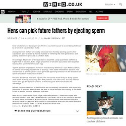 Hens can pick future fathers by ejecting sperm