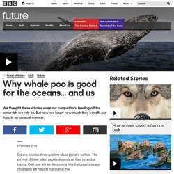 Future - Science & Environment - Why whale poo is good for the oceans... and us