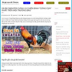 """Gà đá Sweater chính là Chiến binh """"cứng cựa"""" nhất trên mọi trường đấu"""