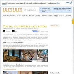 Galeria: Top 10: najdroższe rasy kotów (23/37) - LuxLux