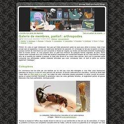 Galerie de membres, partie1: arthropodes