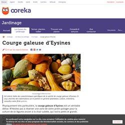 Courge galeuse d'Eysines : origine, culture, consommation