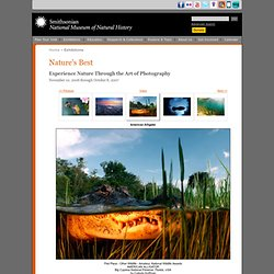 Nature's Best 2006: Image Gallery: American Alligator