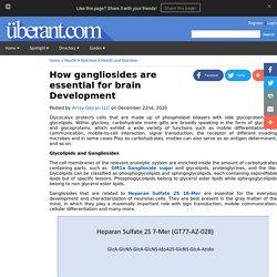 How gangliosides are essential for brain Development