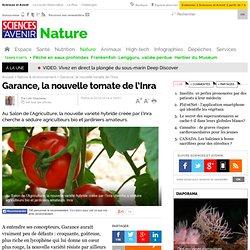 Garance, la nouvelle tomate de l'Inra