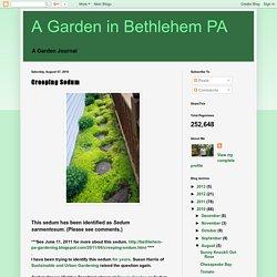 A Garden in Bethlehem PA: Creeping Sedum