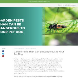 Garden Pests Than Can Be Dangerous To Your Pet Dog — MDX Concepts