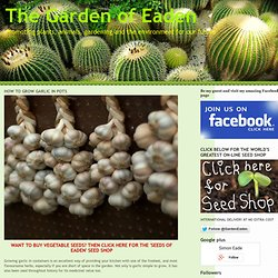 HOW TO GROW GARLIC IN POTS