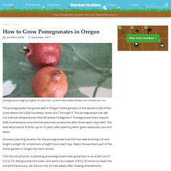 How to Grow Pomegranates in Oregon