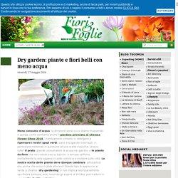 Dry garden: piante e fiori belli con meno acqua