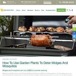 How To Use Garden Plants To Deter Midges And Mosquitos