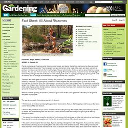 Gardening Australia - Fact Sheet: All About Rhizomes