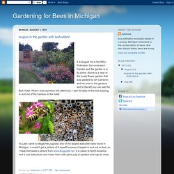 Gardening for Bees in Michigan