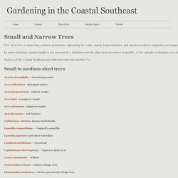small and narrow trees - Gardening in the Coastal Southeast