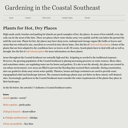 plants for hot, dry places - Gardening in the Coastal Southeast