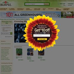 Gardening Videos - Growing Blueberries at Burpee.com - Burpee.com