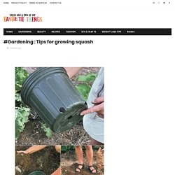 #Gardening : Tips for growing squash - My Favorite Things