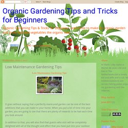 Organic Gardening Tips and Tricks for Beginners: Low Maintenance Gardening Tips