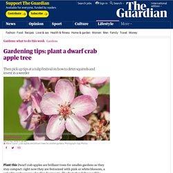 Gardening tips: plant a dwarf crab apple tree