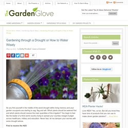 Gardening through a Drought or How to Water Wisely