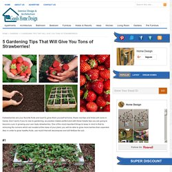 5 Gardening Tips That Will Give You Tons of Strawberries!