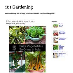 101 Gardening: 5 Easy vegetables to grow in pots #vegetable_gardening