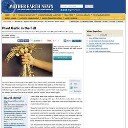 Plant Garlic in the Fall