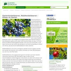 Gartenheidelbeeren, Waldheidelbeeren - Anbau im Garten