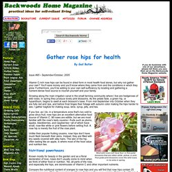 Gather rose hips for health by Gail Butler