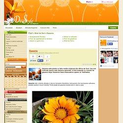 Gazania - Strat de flori
