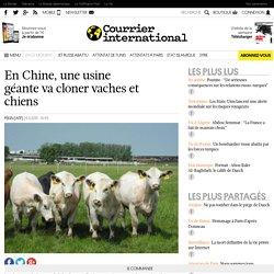 En Chine, une usine géante va cloner vaches et chiens