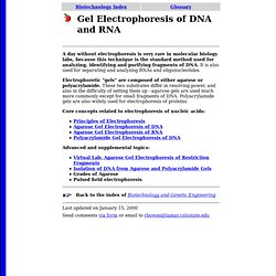 Gel Electrophoresis of DNA and RNA