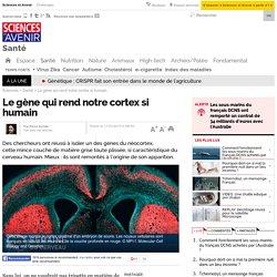 Le gène qui rend notre cortex si humain