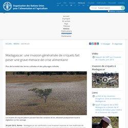 FAO 26/06/13 Madagascar: une invasion généralisée de criquets fait peser une grave menace de crise alimentaire